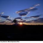 Elx,terra de palmeres