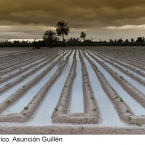 2012-2p-M-Asuncion-Guillen.-Geometrico