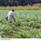 2012-Jesus-del-Hoyo.-Fertilizando