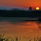 Amanecer en el parque natural del Hondo. Daniel Ferrer