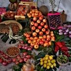 Elche paraiso vegetal. Andrés Mallebrera