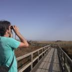 Observando a las aves. Silvia Martínez