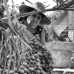 Salvaguardando la cosecha. José Luis Lledo